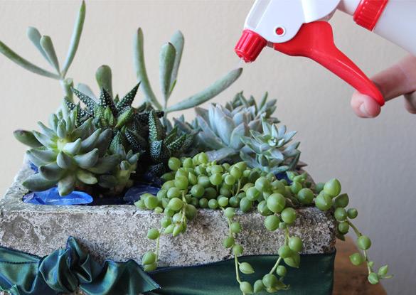 succulent flower arrangements Corona Del Mar CA