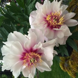 Newport Coast Florist